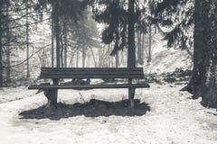 Banco de madera en el bosque del invierno Foto de archivo