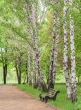 Banco de madera en el parque Imagenes de archivo