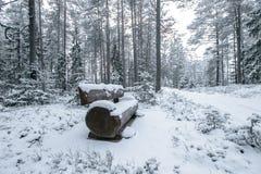 Banco de madera en el parque del invierno Imagen de archivo libre de regalías