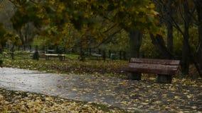 Banco de madera en el parque del otoño bajo la lluvia almacen de metraje de vídeo
