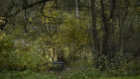Banco de madera en el parque del otoño bajo la lluvia almacen de video