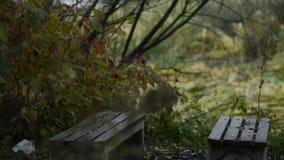 Banco de madera en el parque del otoño bajo la lluvia metrajes