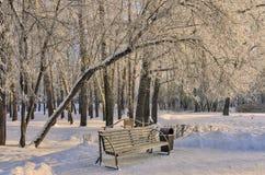 Banco de madera en el parque de la ciudad del invierno en el día soleado Fotografía de archivo libre de regalías