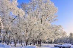 Banco de madera en el parque de la ciudad del invierno en el día soleado Imagen de archivo