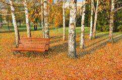 Banco de madera en parque de la ciudad del otoño debajo de los árboles de abedul Fotos de archivo