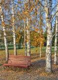 Banco de madera en parque de la ciudad del otoño debajo de los árboles de abedul Foto de archivo