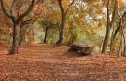 Banco de madera en un parque fotos de archivo