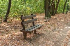 Banco de madera de Forest Park para la relajación Imagenes de archivo