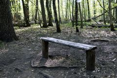 Banco de madera vac?o en el bosque de la primavera fotografía de archivo libre de regalías