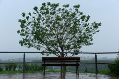 Banco de madera y el árbol en un día lluvioso Foto de archivo