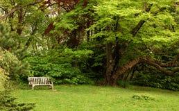 Banco de parque con el árbol próximo Foto de archivo