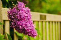 Banco de parque con la lila Fotos de archivo libres de regalías