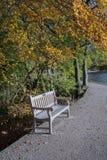 Banco de parque da beira do lago debaixo da árvore do outono imagem de stock