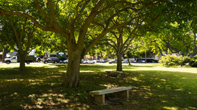 Banco de parque de Kapiolani Fotografía de archivo