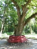 Banco de parque de madera Imágenes de archivo libres de regalías