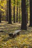 Banco de parque de madera viejo en otoño foto de archivo