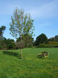 Banco de parque en centro del campo herboso Imagenes de archivo