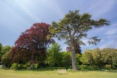 Banco de parque en otoño Imagen hermosa del campo del verano de un woode vacío fotografía de archivo