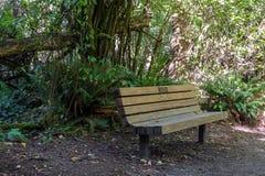 Banco de parque a lo largo de un rastro del pie Fotografía de archivo