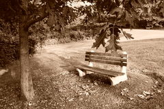 Banco de parque no outono Fotografia de Stock Royalty Free