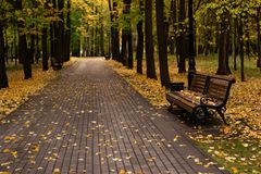 Banco de parque rodeado por las hojas de otoño de oro imagen de archivo