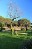 Banco de parque un árbol Imagen de archivo libre de regalías