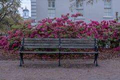 Banco de parque velho e azáleas cor-de-rosa Fotos de Stock