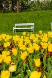 Banco de parque y tulipanes amarillos Imagenes de archivo