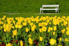Banco de parque y tulipanes amarillos Imágenes de archivo libres de regalías