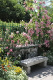 Banco de pedra entre rosas Imagens de Stock Royalty Free