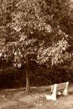 Banco de pensamento da árvore Fotografia de Stock