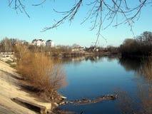 Banco de rio com ramos de árvore imagem de stock