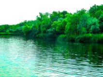 Banco de rio com reflexão das árvores na água, dia ensolarado do verão imagens de stock royalty free