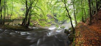 Banco de rio do outono ou do verão com folhas da faia O verde fresco sae em ramos à superfície da àgua faz a reflexão Noite chuvo foto de stock