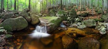 Banco de rio do outono ou do verão com folhas da faia O verde fresco sae em ramos à superfície da àgua faz a reflexão Noite chuvo fotografia de stock