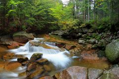 Banco de rio do outono ou do verão com folhas da faia O verde fresco sae em ramos à superfície da àgua faz a reflexão Noite chuvo foto de stock royalty free