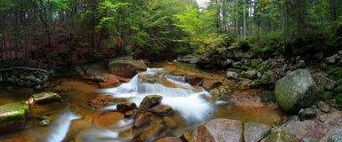 Banco de rio do outono ou do verão com folhas da faia O verde fresco sae em ramos à superfície da àgua faz a reflexão Noite chuvo imagens de stock