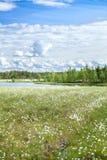 Banco de rio em florestas sempre-verdes pantanosos Imagens de Stock