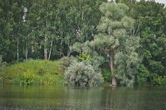Banco de un lago del bosque con los abedules y los sauces Fotografía de archivo
