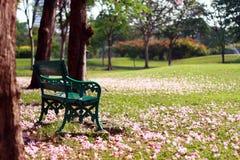 Banco debajo de los flores rosados Fotos de archivo libres de regalías