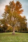 Banco debajo del árbol en un parque Fotografía de archivo