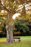 Banco debajo del árbol en un parque Foto de archivo