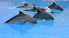 Banco dei delfini Fotografie Stock