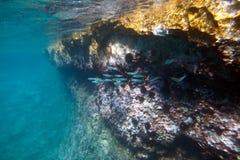 Banco dei pesci Fotografia Stock