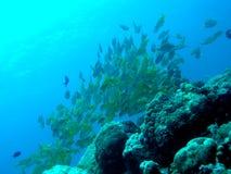 Banco dei pesci Fotografia Stock Libera da Diritti