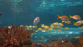 Banco dei pesci Fotografie Stock