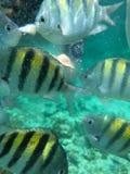 Banco dei pesci Fotografie Stock Libere da Diritti