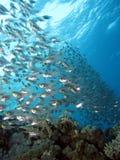 Banco dei pesci di vetro Immagine Stock Libera da Diritti