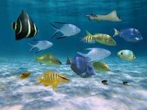 Banco dei pesci sopra un fondo dell'oceano sabbioso fotografia stock libera da diritti