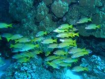 Banco dei pesci sulla scogliera Fotografie Stock